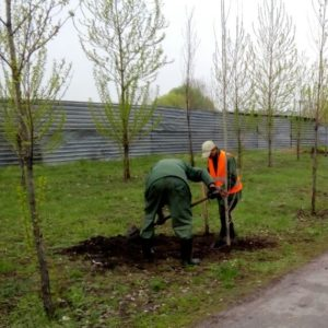 На ТОВ «ЄВРО-РЕКОСТРУКЦІЯ» продовжуються роботи з озеленення санітарно-захисної зони!